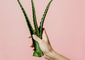 9 Beauty Products That Harness The Healing Power Of Aloe