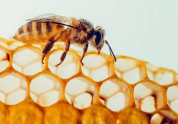 This Is How Using Bee Propolis Benefits Sensitive Skin Types